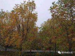 禹州传统文化||坚守是一道风景