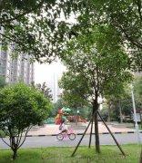 禹州恒达阳光城实景图