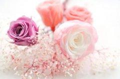 万里客运禹州分公司祝天下所有女同胞们,女神节快乐!