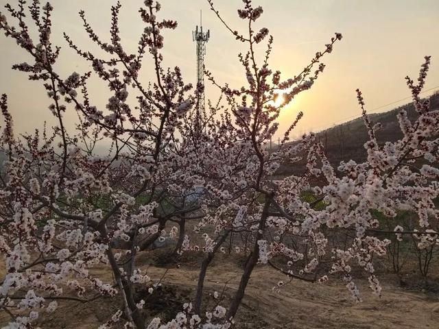 亲爱的朋友,请收下禹州鸠山大山深处的杏花之约!