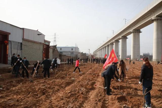 禹州市财政局 开展义务植树志愿服务活动