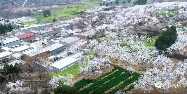 春到禹州城
