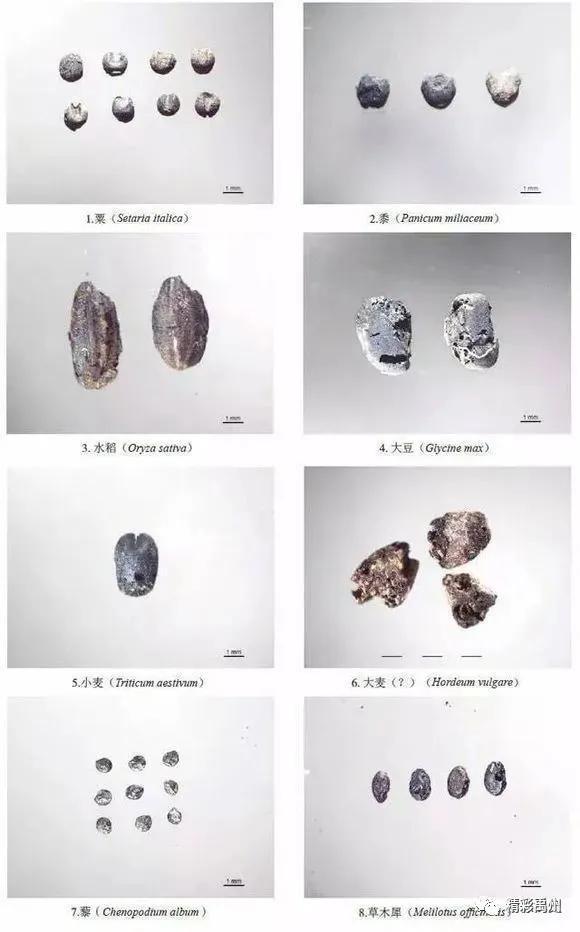 禹州瓦店遗址发现大量植物种子 看看5000年前的人都吃的什么远古时期  古人一般都吃什么呢?  印象中,古人都是靠打猎为生,其实除了打猎之外,古人还会吃一些蔬菜,那么到底远古人类都吃些