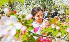 禹州市花石镇河东张庄村3月30举办第三届海棠赏花节