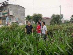 禹州偏远乡村的科技小院
