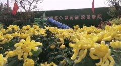 10月1日禹州恒达滨河府第一届菊花展即将开启