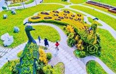 领票啦!2020禹州超大规模金秋菊花花海10月31日盛大迎客!