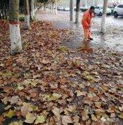禹州环卫:无情落叶惹人烦 雨后清洁暖人心