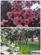 禹州市春蕾学校2021春季开学典礼