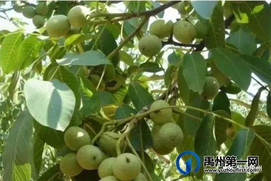禹州文殊镇陈南村:脱贫村里的新产业