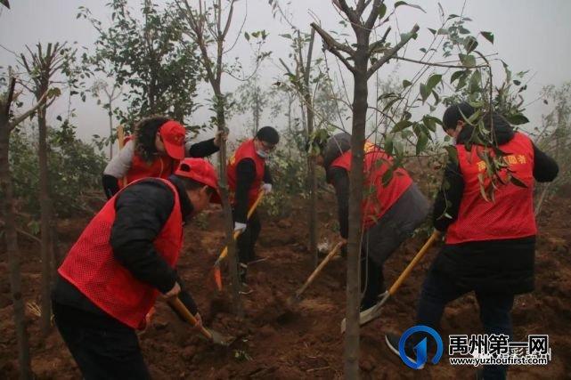 团结协作绿化环保,这些单位为禹州又添新绿!