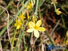禹州市第一高级中学赏花何须长途跋涉 一高校内畅游花海
