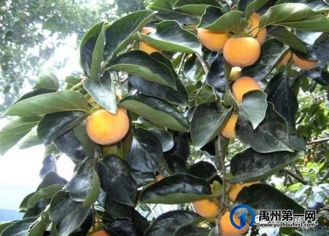 禹州传统文化||最幸福的重逢(散文世界)