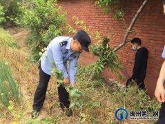 禹州荒地暗藏罂粟 民警依法铲除