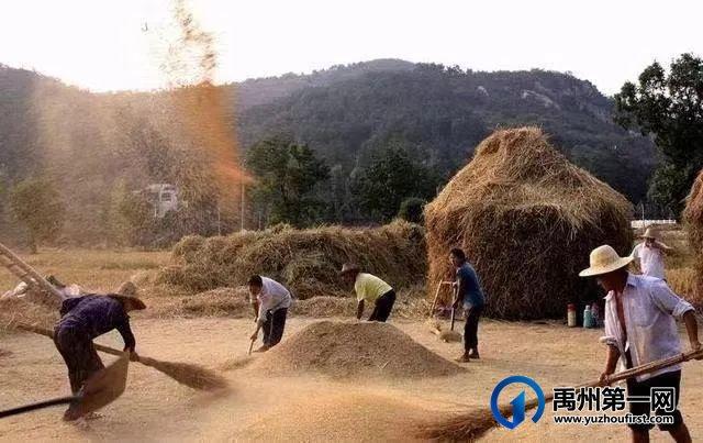 禹州:麦收时节的记忆